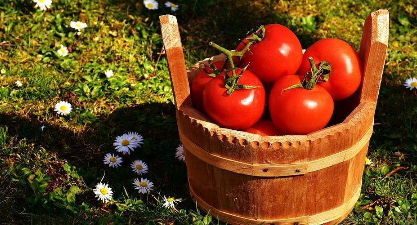 Smaczny Białystok, Kiedy kończy sezon pomidory zaczyna sezon pomidorowy - zdjęcie, fotografia