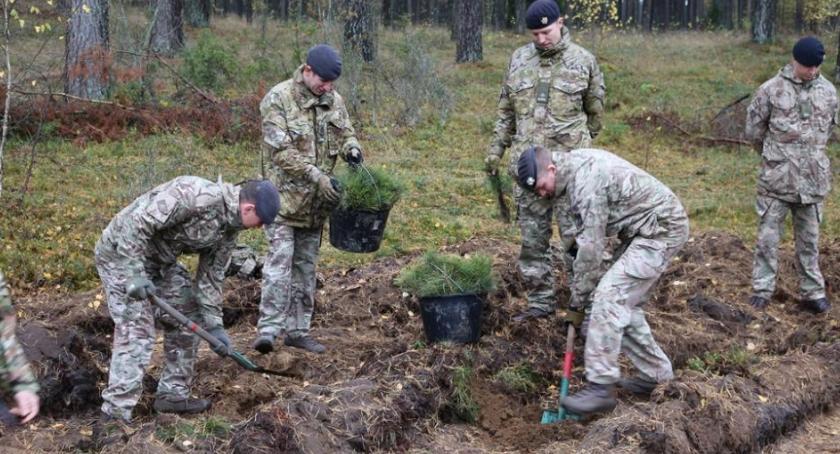 Wiadomości, Żołnierze posadzili kilka tysięcy sadzonek drzew - zdjęcie, fotografia
