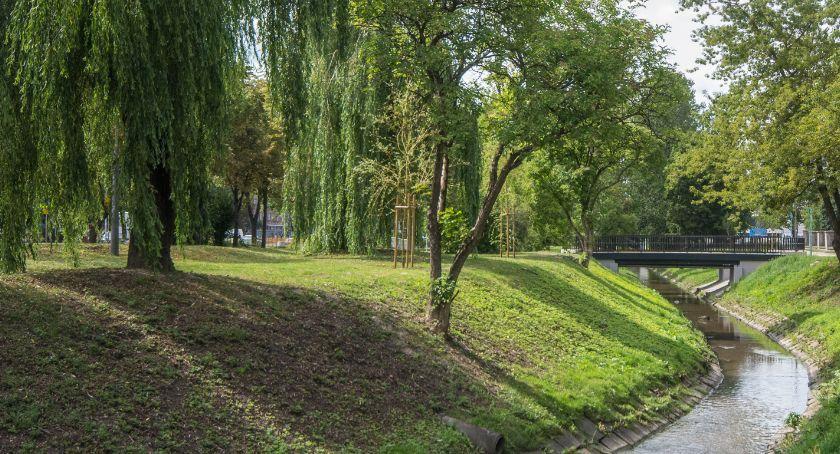 Styl Życia, Alergicy mają łatwo wcześniej pylą drzewa - zdjęcie, fotografia