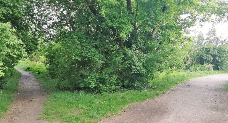 Wiadomości, łąkach między Sybiraków Łupaszki grasuje ekshibicjonista - zdjęcie, fotografia