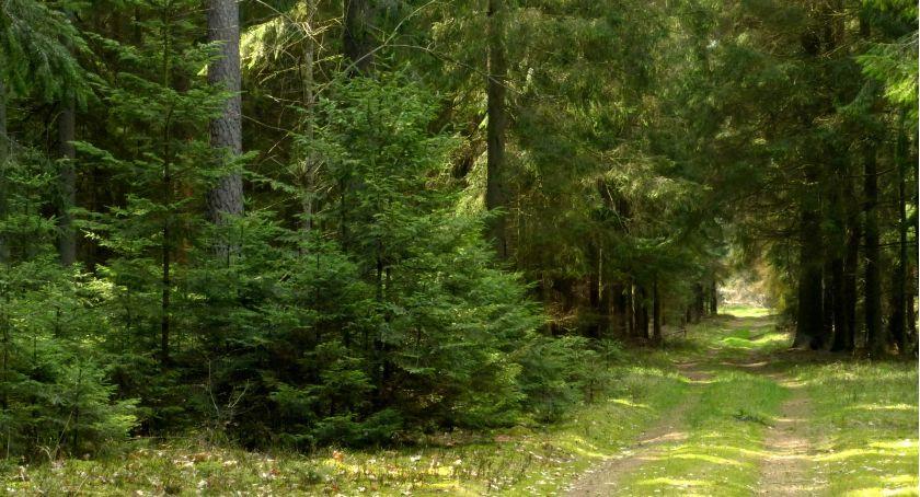 Wiadomości, Politechnika Białostocka uruchamia wydział leśnictwa Białymstoku - zdjęcie, fotografia