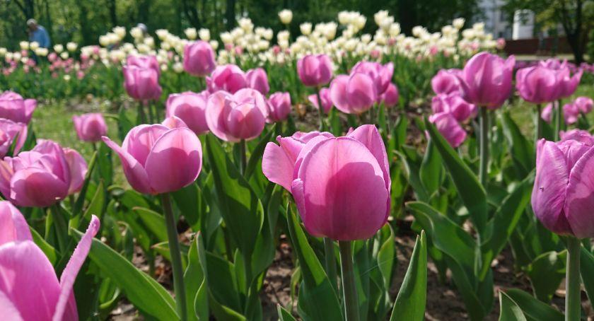 Styl Życia, Kwiatami zasadzie zamiast można spełnić marzenie - zdjęcie, fotografia
