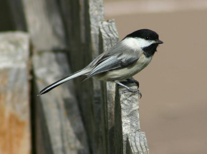 Wiadomości, Białostoczanie dbają ptaki - zdjęcie, fotografia