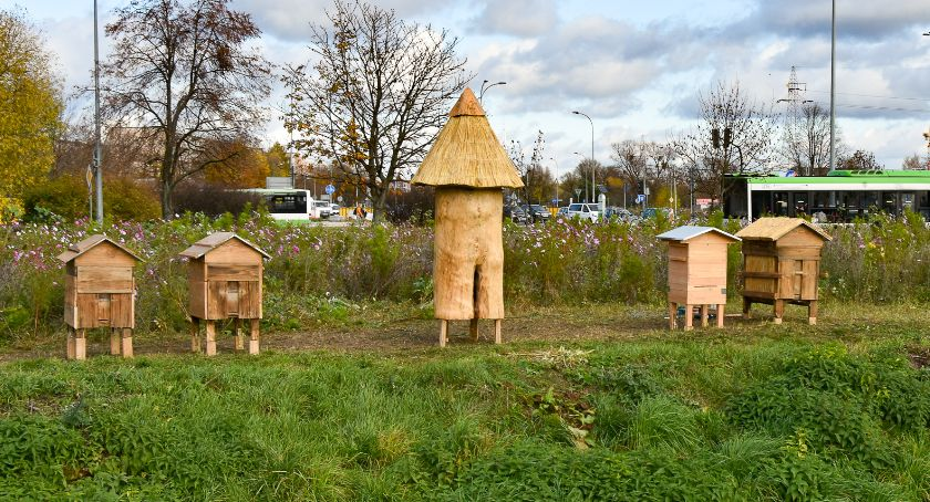 Wiadomości, Miejskie pszczoły zadomowiły ulach Augustowskiej - zdjęcie, fotografia