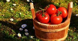 Pomidory przypadły Polakom do gustu