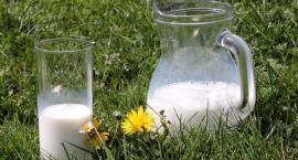 Znów polubliśmy picie mleka