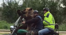 Niedźwiedź jechał motorem i pozdrawiał przechodniów