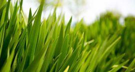 Plamy z trawy da się usunąć
