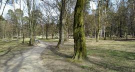 W miejskich parkach może doskonale rozwijać się dzikie życie