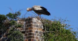 Leśnicy założą obrączki uratowanym ptakom