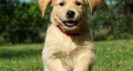 Zdrowa karma = zdrowy pies