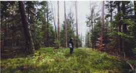 Spacer po lesie to same plusy