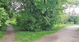 Na łąkach między Sybiraków a Łupaszki grasuje ekshibicjonista