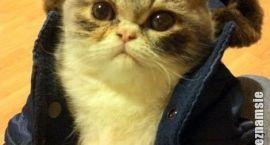 Internetowe koty na poniedziałek