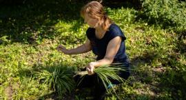 Podlaskim produktem lokalnym jest trawa żubrowa