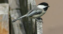 Białostoczanie dbają o ptaki