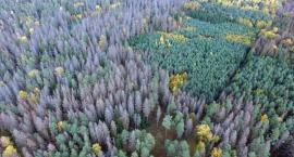 Organizacja ekologiczna wprowadzała w błąd. Znów chodzi o Puszczę Białowieską