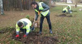 W białostockim lesie przybyło 200 drzew