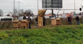Dzięki miejskim ulom Białystok jest przyjazny pszczołom