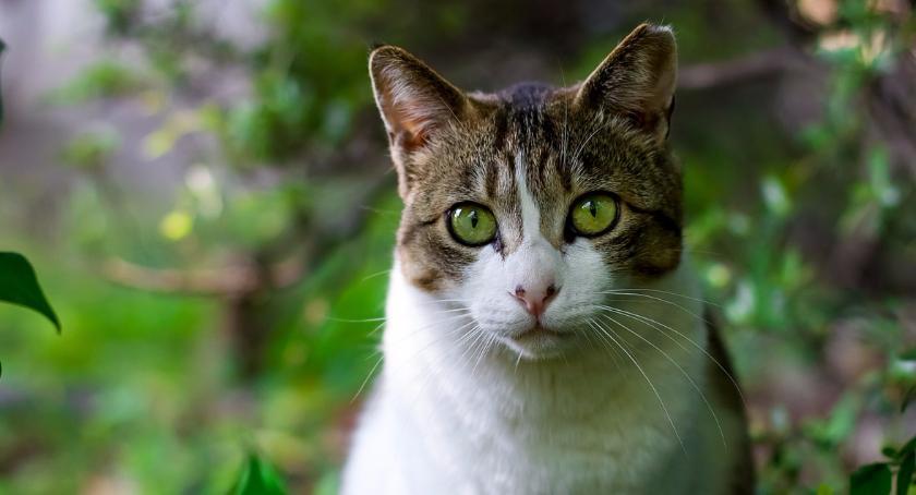 Zwierzęta, Grochowa [WOLONTARIAT] - zdjęcie, fotografia
