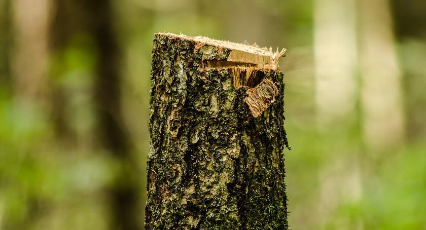 Zieleń, drzewa wycięte zezwolenia - zdjęcie, fotografia