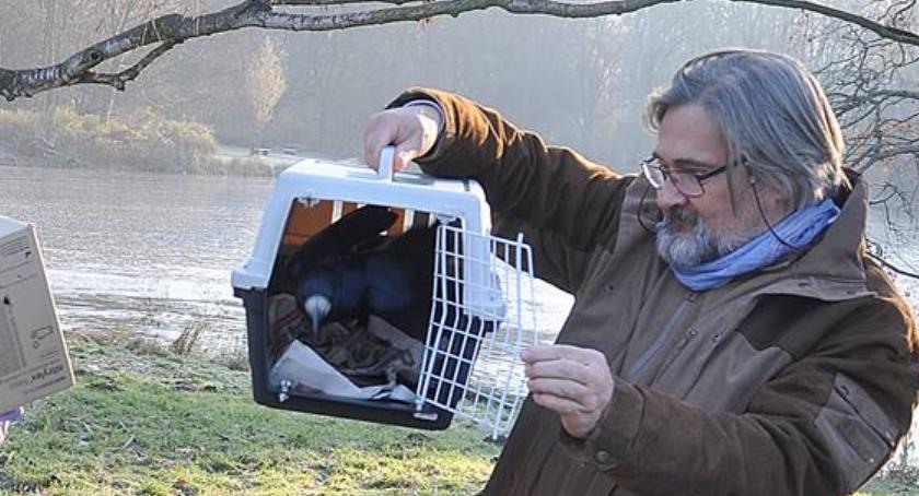Zwierzęta, Uratowane zatruciu ptaki zamieszkały parku Skaryszewskim [ZDJĘCIA] - zdjęcie, fotografia