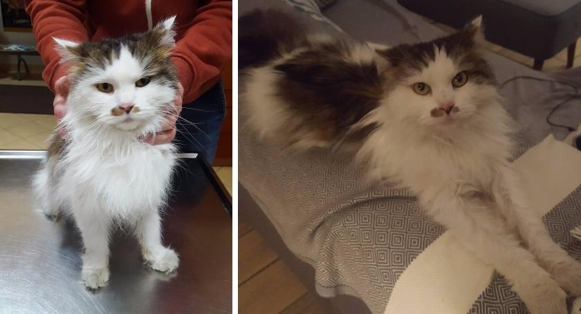 Zwierzęta, Szukamy właściciela kotka znalezionego Gocławiu - zdjęcie, fotografia