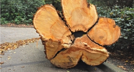 Kilkadziesiąt drzew wyciętych przy ul. Arabskiej na Saskiej Kępie