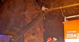 Dziecko na drzewie - nietypowa interwencja strażaków [ZDJĘCIA]