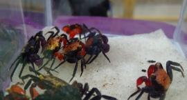 Wystawa roślin i zwierząt egzotycznych już w najbliższą niedzielę