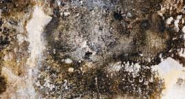 Tragiczne warunki mieszkalne w kamienicy na Mińskiej