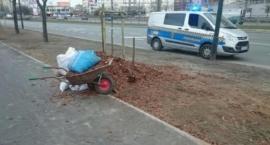 Strażnicy miejscy złapali złodziei... kory drzewnej przy Al. Stanów Zjednoczonych