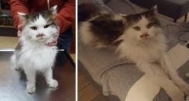 Szukamy właściciela kotka znalezionego na Gocławiu