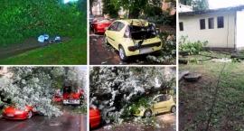 Drzewa na Pradze Południe padają. Kilka groźnych wypadków w ostatnich dniach