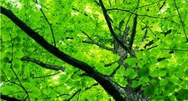 Stare drzewo spadło na kobietę i dziecko. Radny Pragi Południe szuka winnego