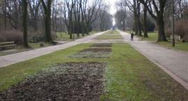 Pobicie w Parku Skaryszewskim - nie zgłoszono przestępstwa