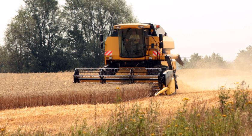 Klęska na polach w Gminie Szczecinek. Są duże straty w uprawach