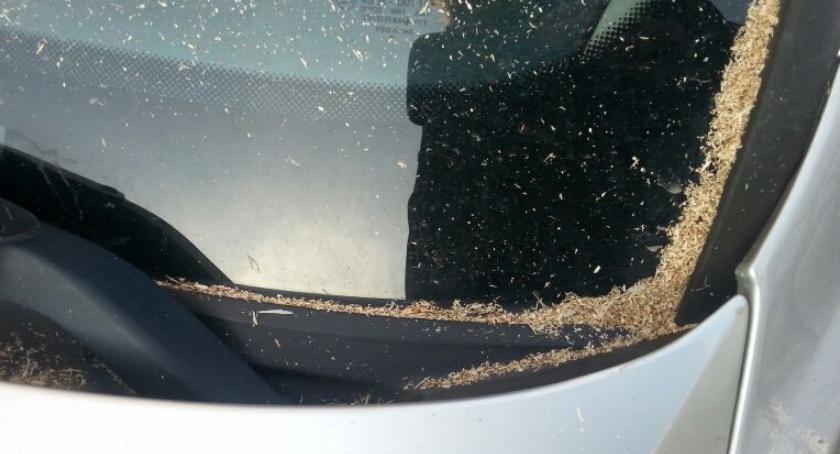 Trociny na masce samochodu