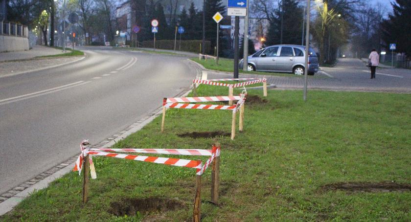 Nowe drzewa na ulicach Szczecinka. Przygotowania do Kronodrzewka