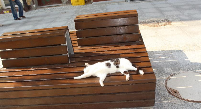 Kot docenia nowe ławki w Szczecinku