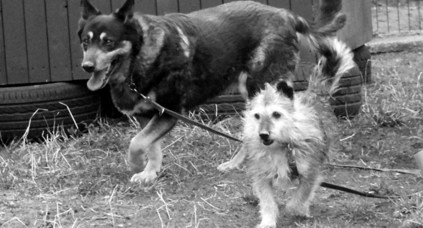 Bezdomne psy, Sara i Wojtek nawet w schronisku były nierozłączne. To już koniec psiej legendy
