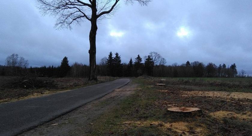 Wycinka między Sitnem a Dzikami. Pod piłą padają leciwe drzewa