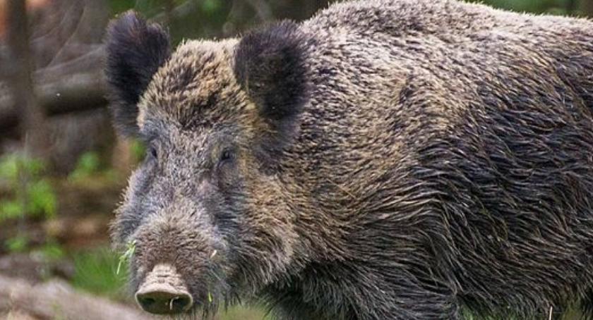 Dzikie zwierzęta w mieście. Jak sobie z nimi radzić?