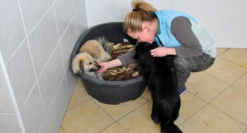 Gminne psy trafią do schroniska w Szczecinku