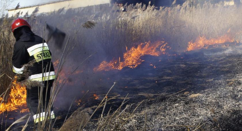 Straż Pożarna, Znowu płonęły trawy Tydzień pracy szczecineckich strażaków - zdjęcie, fotografia