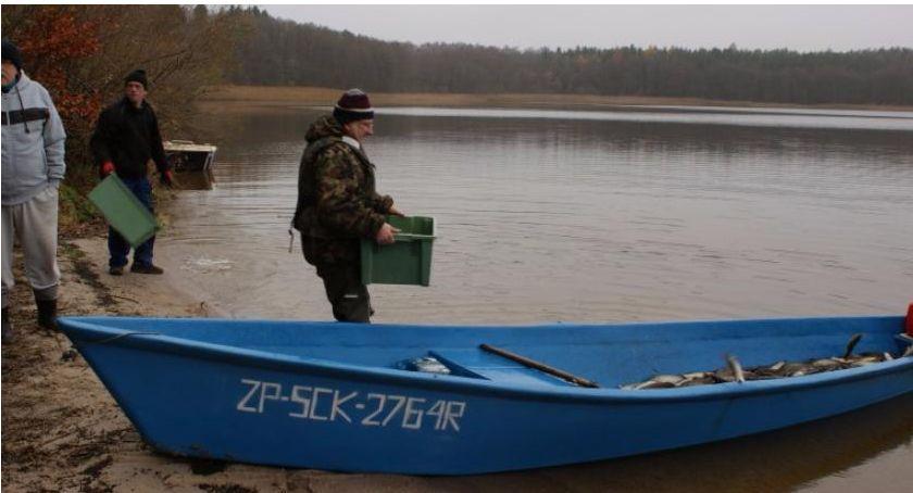 Jezioro Wierzchowo, zarybianie. Foto: Urząd Gminy Szczecinek