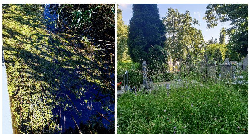 Kto pilnuje porządków na cmentarzu i w parku?
