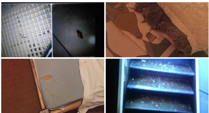 Połamane łóżka, brudna woda, pajęczyny, biegające robaki. Czy tak miały wypoczywać dzieci ze Szczecinka?