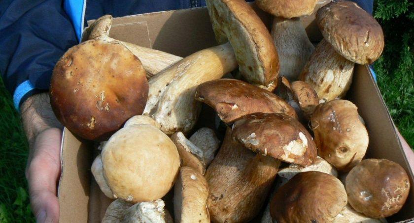 Trzy kilometry błądził po lesie pod Szczecinkiem w poszukiwaniu grzybów. Szukali go mieszkańcy i strażacy