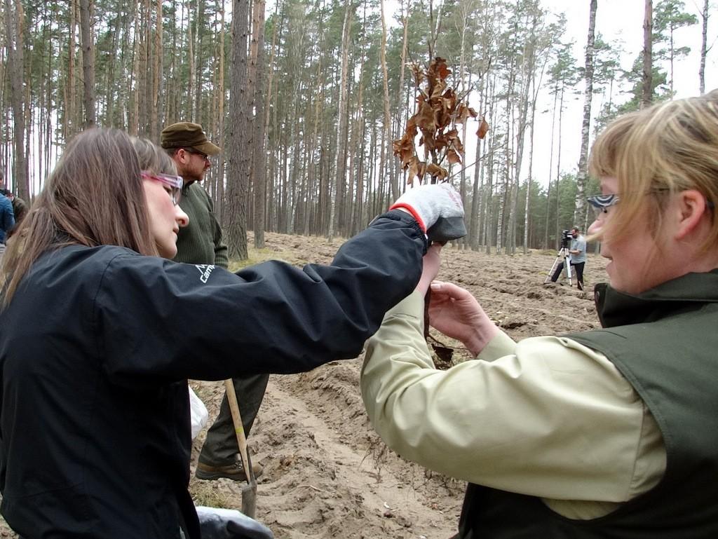 Aktualności, Wspólne sadzenie szczecineckich leśników tradycja (wideo) - zdjęcie, fotografia
